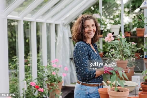 reife frau wachsende einheimische lebensmittel in ihrem gewächshaus pflanzen - gewächshäuser stock-fotos und bilder
