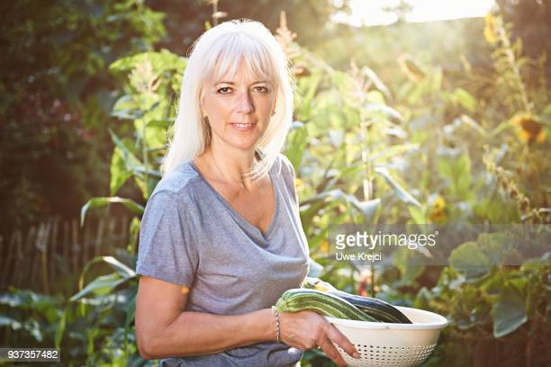 mature woman harvesting zucchini in her garden - schleswig holstein stock photos and pictures