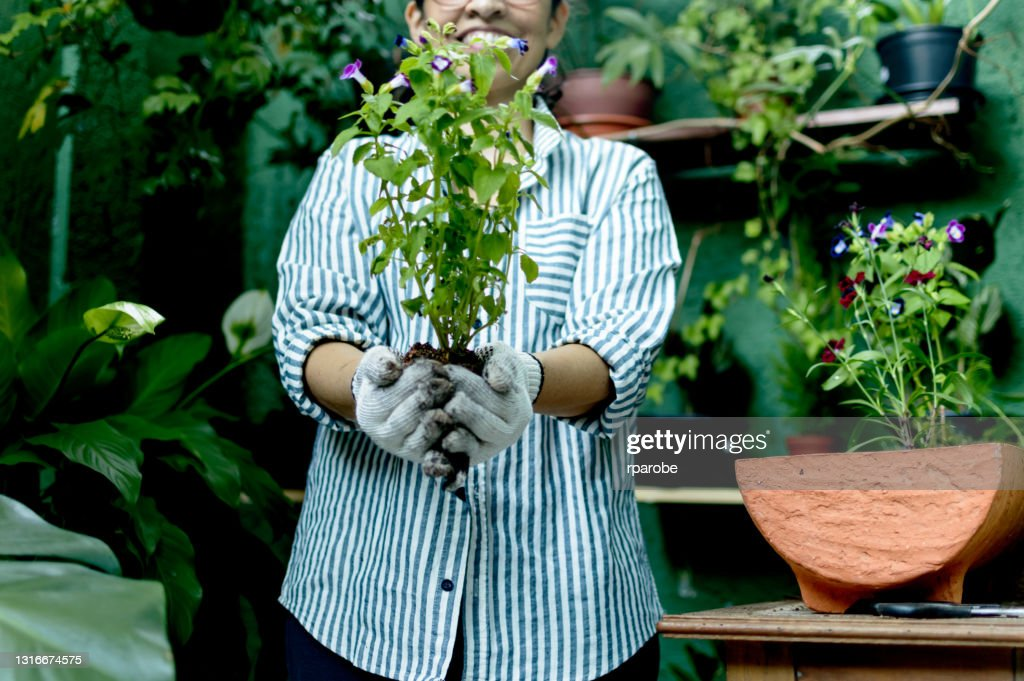 A Mature Woman Holding Plant Seedlingn High-Res Stock