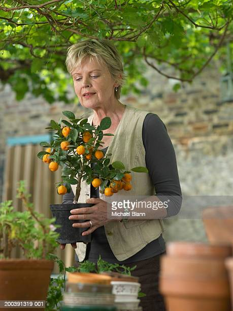 mature woman in garden holding potted fruit tree - alleen één oudere vrouw stockfoto's en -beelden