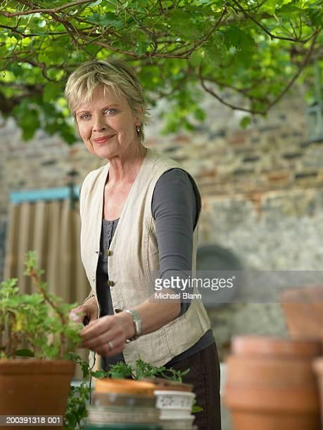 Mature woman in garden tending pot plants, smiling, portrait