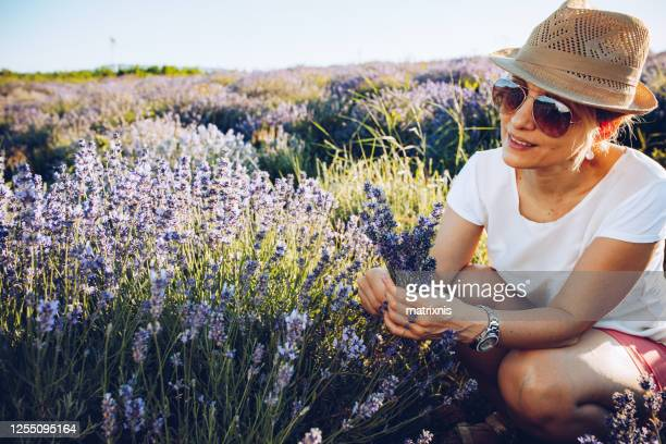 mature woman in lavender fields - matrixnis stock pictures, royalty-free photos & images