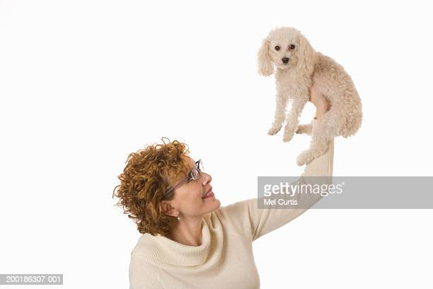 mature woman lifting miniature poodle up in air, smiling - miniature poodle stock photos and pictures
