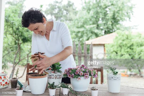 mature woman nursing flowers - potting stock pictures, royalty-free photos & images