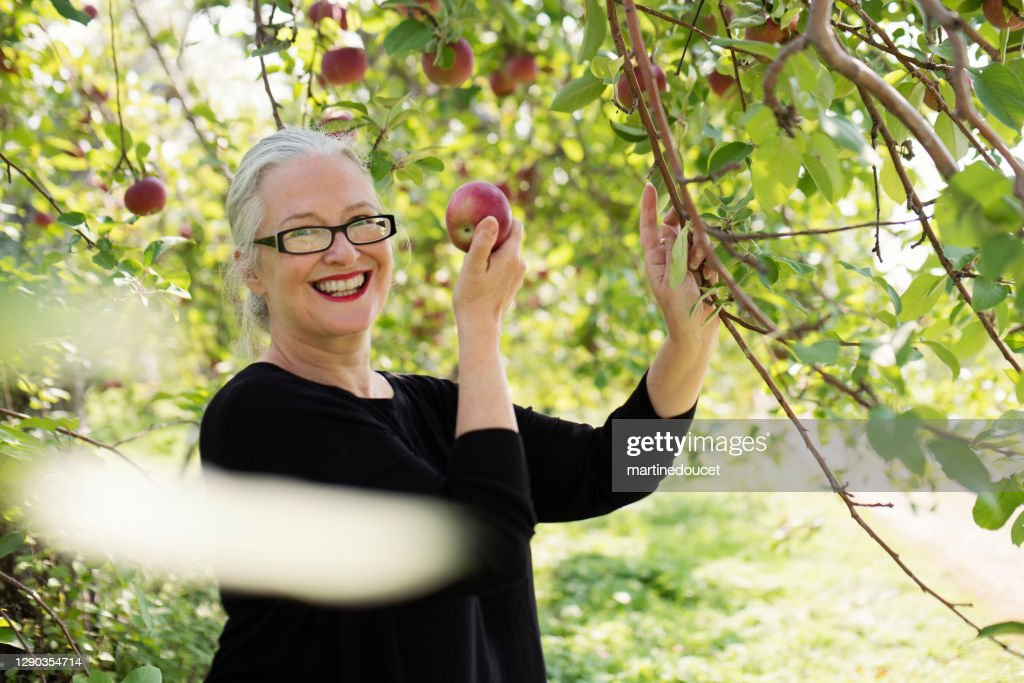 Mature woman picking up apples in orchard. : Stock Photo