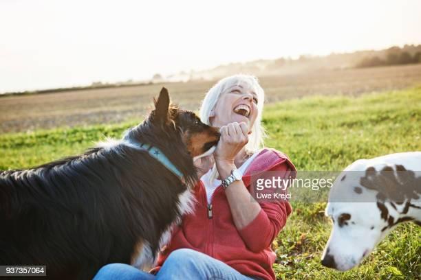 mature woman playing with dogs - schleswig holstein stock photos and pictures