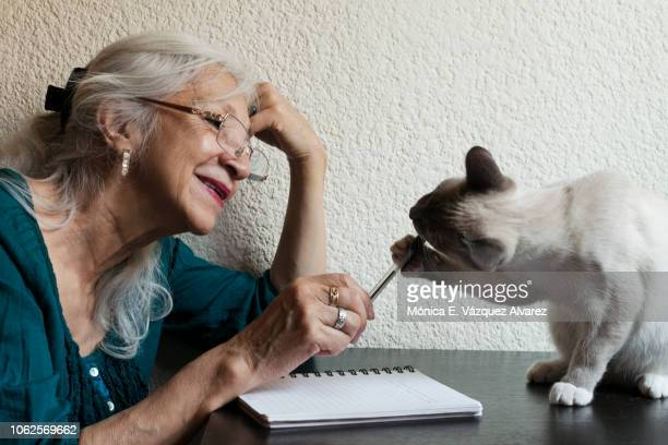 a mature woman plays with a kitten - pet -studio stock photos and pictures