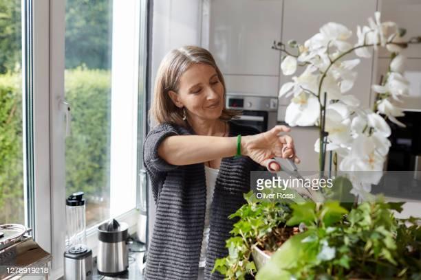 mature woman pruning an orchid at home - cortar atividade - fotografias e filmes do acervo