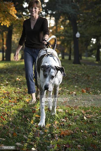 mature woman walking great dane in park, smiling - great dane stock pictures, royalty-free photos & images
