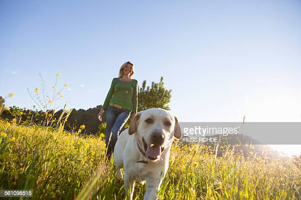 Mature woman walking labrador retriever in sunlit wildflower meadow