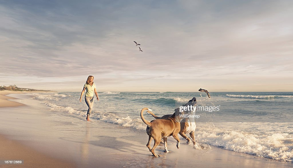 Mature woman walking two dogs seaside sunset : Stock Photo