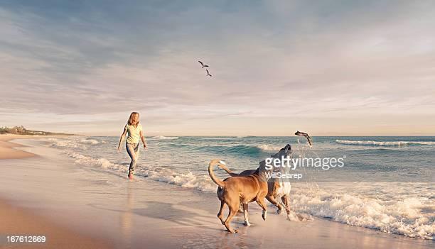 Reife Frau zu Fuß zwei Hunde am Strand bei Sonnenuntergang