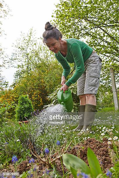 mature woman watering flowers in garden - older woman bending over stock pictures, royalty-free photos & images