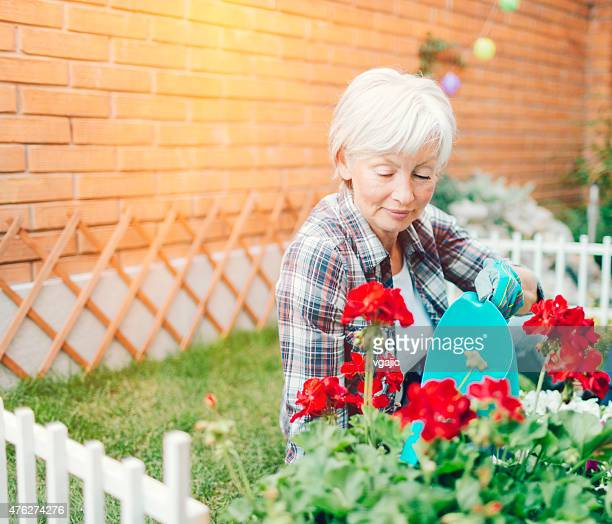 Mature Woman Watering Flowers In Her Backyard.