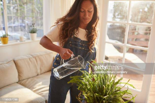 mature woman watering hanging plants in her lounge - watering stock pictures, royalty-free photos & images