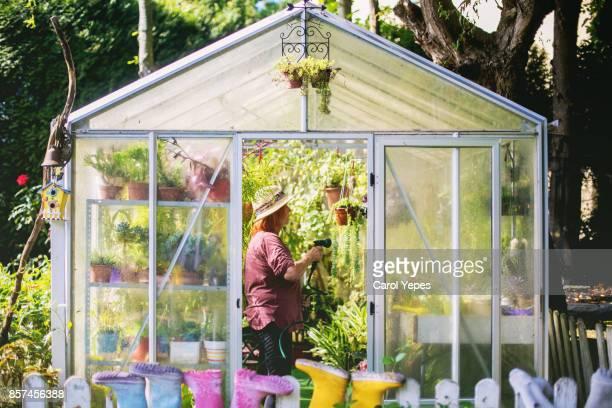 mature woman watering in greenhouse - gewächshäuser stock-fotos und bilder