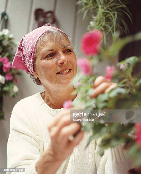 Mature woman wearing head scarf tending flowers in garden, smiling