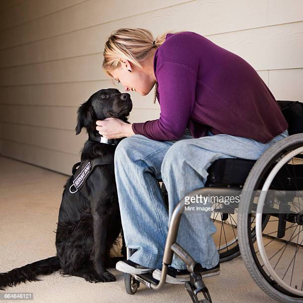 A mature woman wheelchair user stroking her black labrador service dog and making eye contact with the dog.
