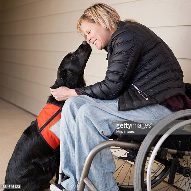 A mature woman wheelchair user with her service dog, a black labrador, leaning in towards each other.