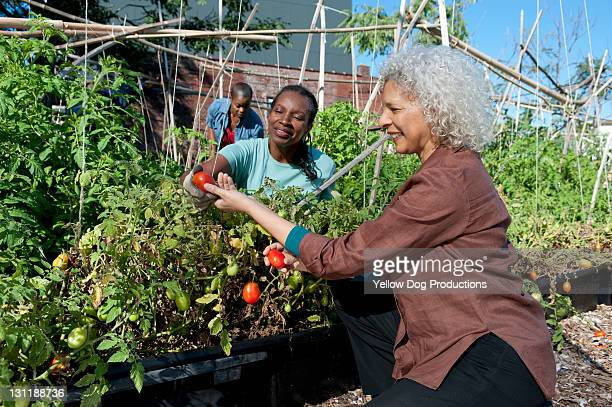 Mature Women Working in Organic Community Garden