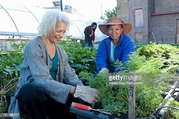 Mature Women Working in Urban Community Garden
