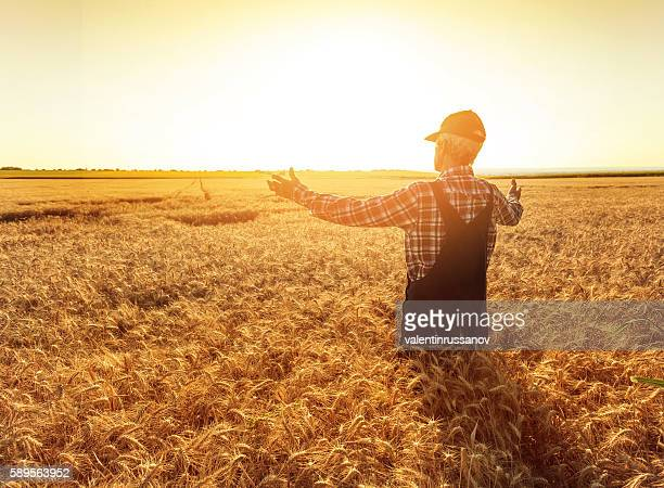 Matured farmer standing in the middle of his wheat field