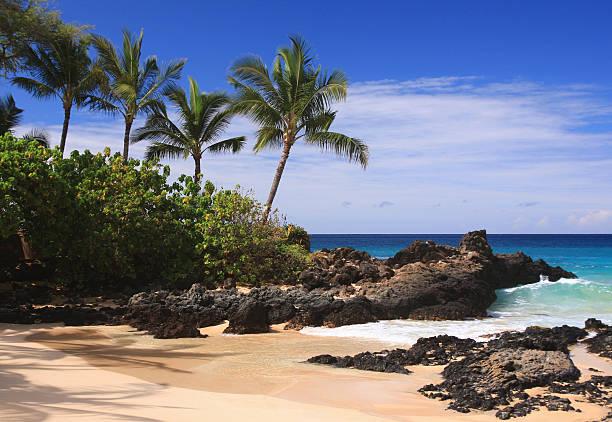 Maui Hawaii Pacific Ocean Palm Tree Beach Scene Wall Art