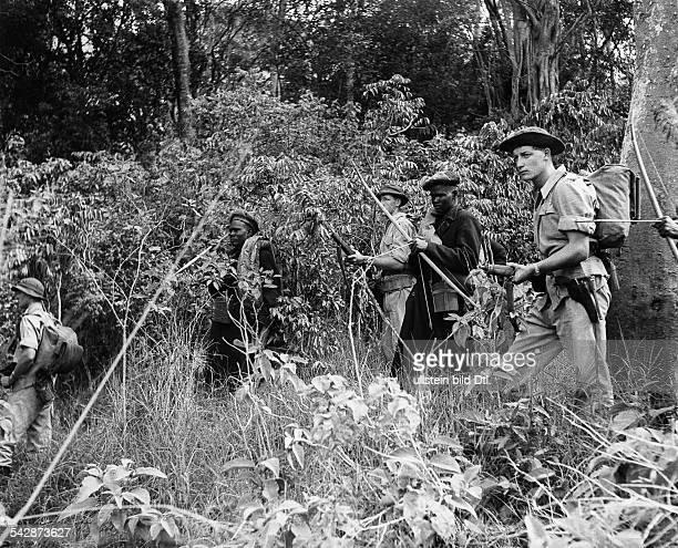 MauMau Bewegung Weisse Siedler und Kikuyu Hilfstruppen suchen im Busch nach Verstecken der MauMauKrieger 1958/59