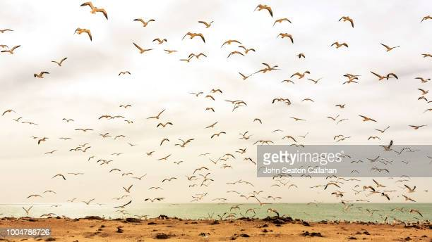 Mauritania, the Nouadhibou Peninsula