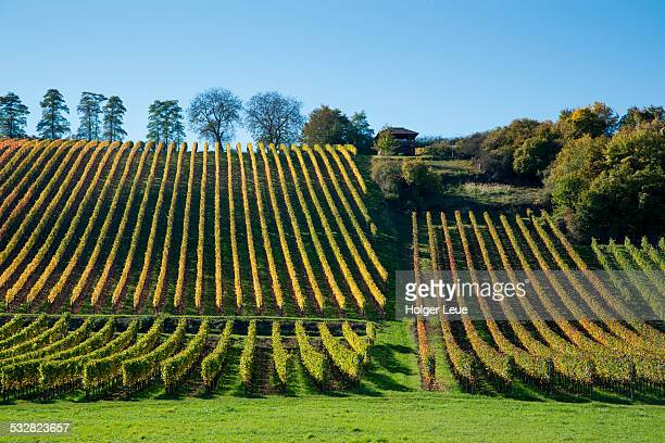 Maustal vineyard in autumn
