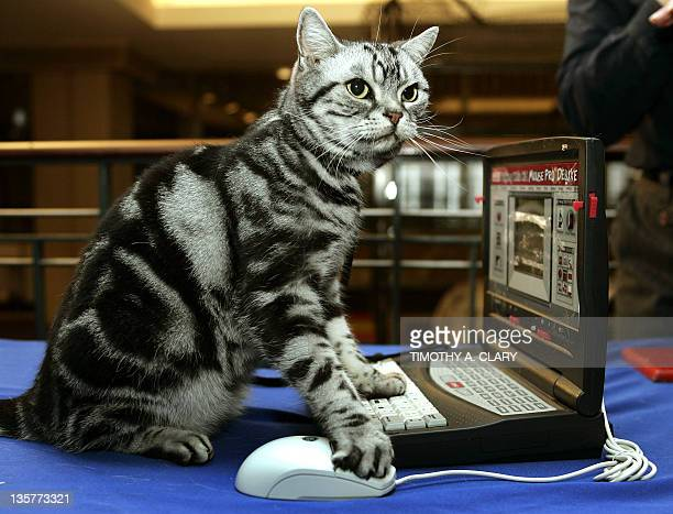 Maverick the American Short Hair Silver Classic Tabby plays with a computer mouse and his laptop during the press preview 11 October at the 4th...