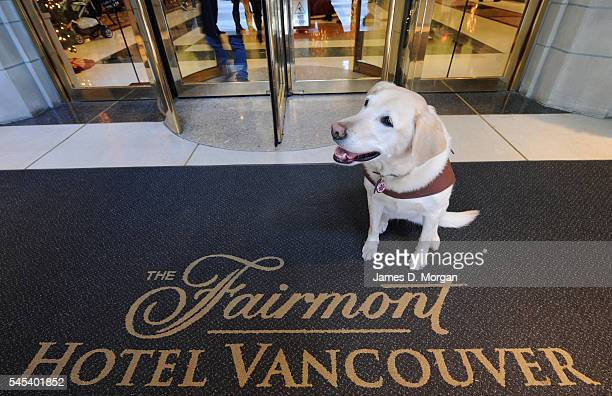 Mavis and Beau the hotel dogs on January 06 2009 in Vancouver Canada Hotels worldwide are always trying to accommodate the needs of their guests and...
