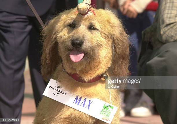 max the dog of how the grinch stole christmas during animal actors walk of