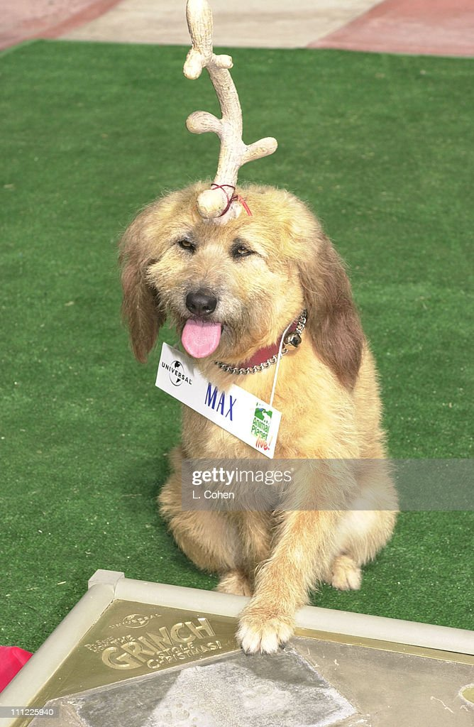 Grinch Stole Christmas Dog.Max The Dog Of How The Grinch Stole Christmas During