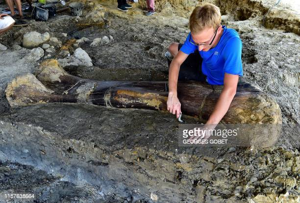Maxime Lasseron researching his doctorate at the National Museum of Natural History of Paris inspects the femur of a Sauropod on July 24 after it was...