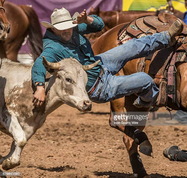 Blane Jones from Templeton California scores 53 seconds in steer wrestling at the 58th Annual Mother Lode RoundUp in Sonora California on Sunday May...