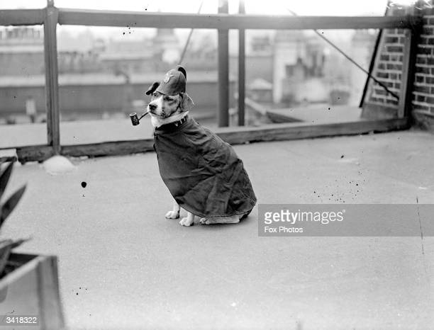 A dog dressed up as a policeman and with a pipe in its mouth