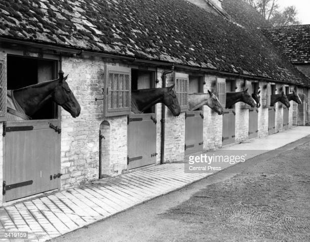 American polo ponies in the stables at the Beaufort Polo Club Norton