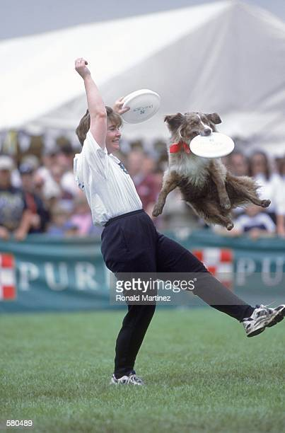 A dog leaps up to catch a frisbee tossed by its owner during the Purina Incredible Dog Challenge at the South Fork Ranch in Dallas TexasMandatory...