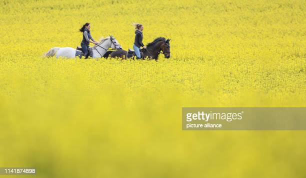 07 May 2019 BadenWuerttemberg Langenenslingen Two riders ride their horses through flowering rape fields Photo Thomas Warnack/dpa