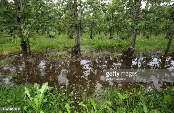 May 2019, Baden-Wuerttemberg, Meckenbeuren: Rainwater collects at the bottom of an apple orchard. Photo: Karl-Josef Hildenbrand/dpa