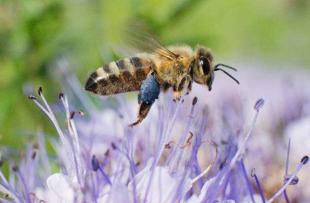 DEU: World Bee Day