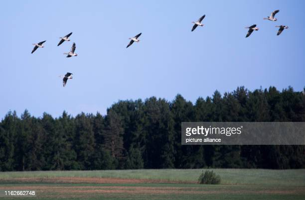 May 2019, Mecklenburg-Western Pomerania, Boek: All fly over a field in the Müritz National Park. Founded in 1990, the Müritz National Park is located...