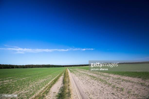 May 2019, Mecklenburg-Western Pomerania, Boek: Lanes on a field in the Müritz National Park. Founded in 1990, the Müritz National Park is located in...