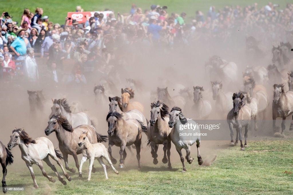 DEU: Rounding Up Wild Horses