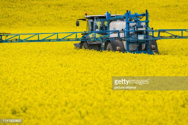 When treating rape flowers a tractor pulls a plant sprayer through a rape field near Borstel The farmers' associations in SaxonyAnhalt and Thuringia...