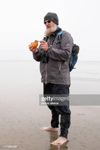 31 May 2019 SchleswigHolstein Dagebüll Martin Stock botanist and ornithologist at the Landesbetrieb Küstenschutz Nationalpark und Meeresschutz in...