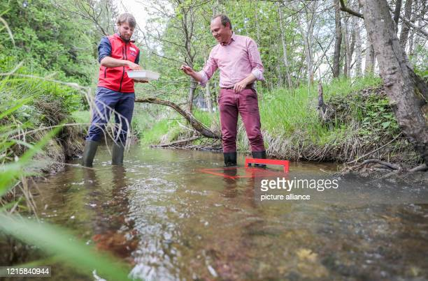 PhD student Felix Grunicke and Wolfram Günther Minister of the Environment of Saxony poach river pearl mussels in the Raunerbach Over the next few...