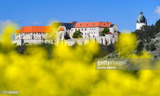 May 2020, Saxony, Freyburg: The Neuchâtel above the city of Freyburg is strikingly visible between blue sky and yellow rape. The wine region along...