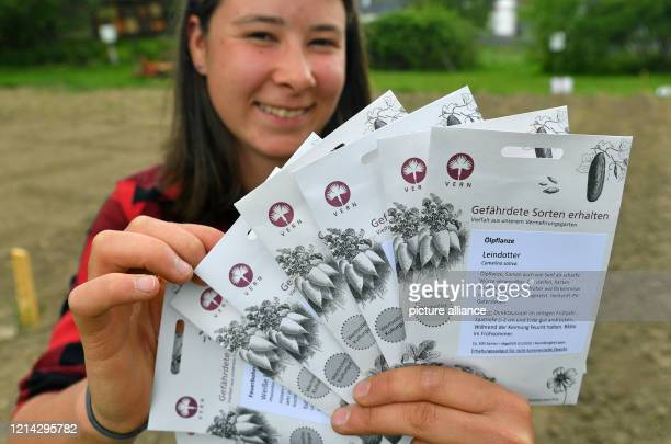 May 2020, Saxony, Wolkenstein: Desiree Hillig holds in her hands seeds of historical plants on the Ambross estate in Selva Gardena. In spring, the...